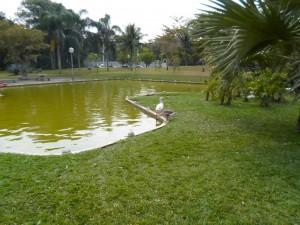 lago-2