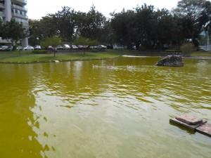 lago-9